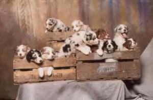 Tigger_puppy_in_crate